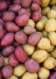 Organische rote und gelbe Kartoffeln Lizenzfreie Stockbilder