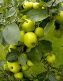 Organische ryton ryton tuinen warwickshire de Midlands Engeland van de tuin Royalty-vrije Stock Afbeeldingen