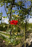 Organische ryton ryton tuinen warwickshire de Midlands Engeland van de tuin Stock Foto's