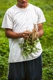 Organische süße Kartoffeln Lizenzfreie Stockfotografie