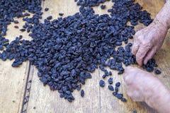 Organische schwarze Rosinen stockfotos