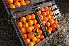 Organische sinaasappelen voor verkoop in houten dozen Royalty-vrije Stock Fotografie