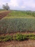 Organische slechts natuurlijke vegetablets, royalty-vrije stock fotografie