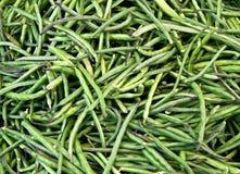 Organische Snijbonen Stock Foto