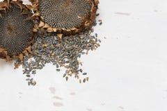 Organische Sonnenblumenköpfe Stockfoto