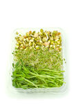 Organische spruiten royalty-vrije stock afbeelding