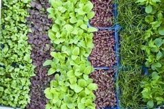 Organische spruiten royalty-vrije stock foto
