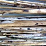 Organische Texturen 1 Royalty-vrije Stock Afbeelding