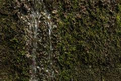 Organische Textuur Stock Afbeelding