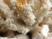 Organische textuur - wit koraal stock foto's