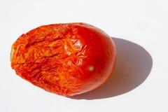 Organische tomaat in de zon royalty-vrije stock foto's