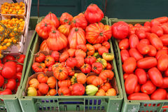 Organische Tomate Stockfotos