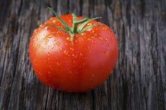 Organische Tomate mit Wasser-Tröpfchen-Nahaufnahme Lizenzfreies Stockfoto