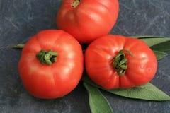 Organische Tomate vom ländlichen permaculture Stockfotografie