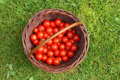 Organische Tomaten Royalty-vrije Stock Foto