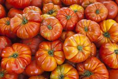 Organische Tomaten des Dorfmarktes Qualitativer Hintergrund von den Tomaten Frische Tomaten Rote Tomaten Stockfoto
