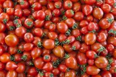 Organische Tomaten des Dorfmarktes Qualitativer Hintergrund von den Tomaten Frische Tomaten Rote Tomaten Lizenzfreies Stockfoto