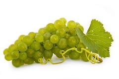 Organische Trauben Stockfoto