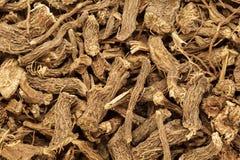 Organische trockene Wurzel des gemeinen Kalmus (Acorusgemeiner kalmus) Stockbild