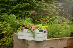Organische Tuinoogst Stock Foto's