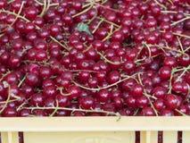 Organische und frische rote Johannisbeeren auf Landwirtmarkt Lizenzfreie Stockfotografie
