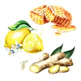 Organische verse gember, citroen en honingsreeks Waterverfhand getrokken die illustratie, op witte achtergrond wordt geïsoleerd Stock Foto's