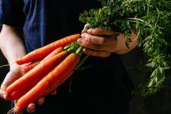 Organische verse geoogste groenten Landbouwers` s handen die verse wortelen, close-up houden Royalty-vrije Stock Afbeelding
