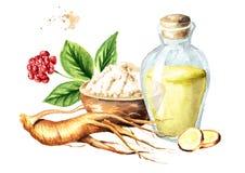 Organische verse ginsengsamenstelling Wortel, blad, bloem, poeder, tint Waterverfhand getrokken die illustratie, op witte bac wor vector illustratie