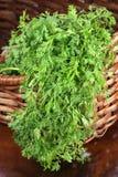 Organische verse koriander op mand Stock Foto's