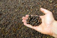 Organische verse nieuwe droge koffiebonen op hand Royalty-vrije Stock Foto's