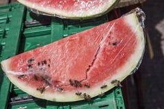 Organische Wassermelone stockfotos