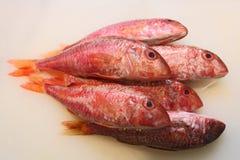 Organische wilde Fische Stockbild