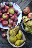 Organische Winterfrucht Stockbilder