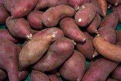 Organische Yamswurzeln Stockbilder