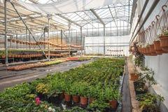 Organische Zierpflanzen und Blumen im modernen Wasserkulturgewächshaus oder im Treibhaus mit Klimaregelungssystem stockbilder