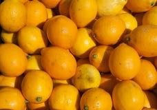 Organische Zitronen Lizenzfreie Stockbilder