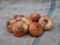 Organische Zwiebeln Stockbild
