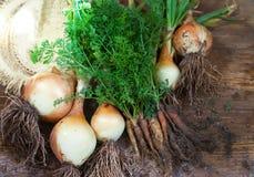 Organische Zwiebeln und Karotten stockfotos