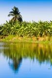 Organischer Bananengarten Lizenzfreies Stockbild