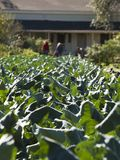 Organischer Bauernhof Lizenzfreies Stockfoto