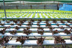 Organischer Bauernhof Stockfoto