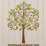 Organischer Baum des Woodgrain Stockbilder