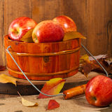 Organischer beschrifteter Apfel Lizenzfreie Stockfotografie