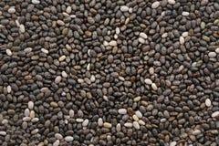 Organischer Chia Seed, Supernahrung stockfotografie