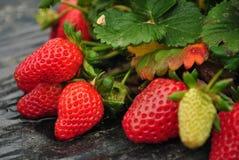 Organischer Erdbeere-Bauernhof für Sammeln Lizenzfreie Stockfotografie