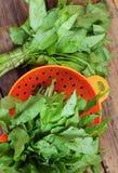 Organischer frischer Sauerampfer im Sieb Stockfoto