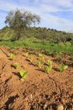 Organischer Garten Lizenzfreies Stockfoto