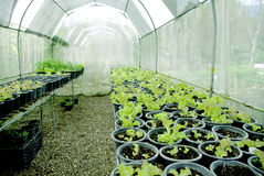 Organischer Gemüsebauernhof stockfotografie