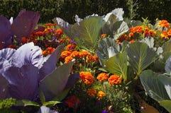 Organischer Gemüsegarten. Lizenzfreies Stockfoto