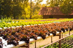 Organischer Gemüsegarten Lizenzfreie Stockfotos